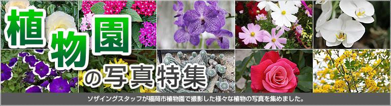 植物園の写真特集