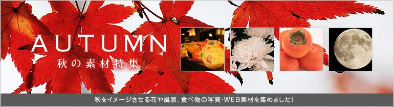 秋の素材特集
