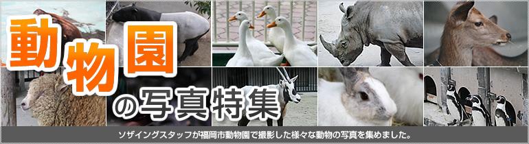 動物園の写真特集