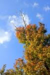 色づき始めの紅葉と空
