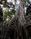 カンボジアのタ・プローム