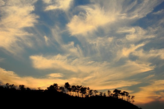木のシルエットと空