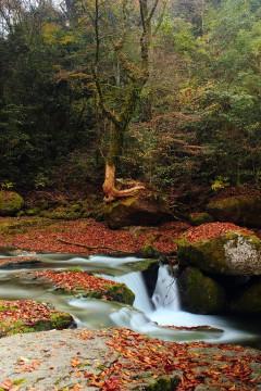 山の紅葉2