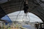 1313_lamp