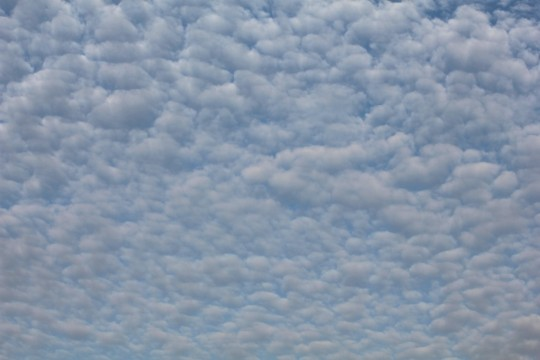 ひつじ雲1