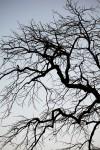 1313_tree2