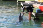 イルカと飼育係さん
