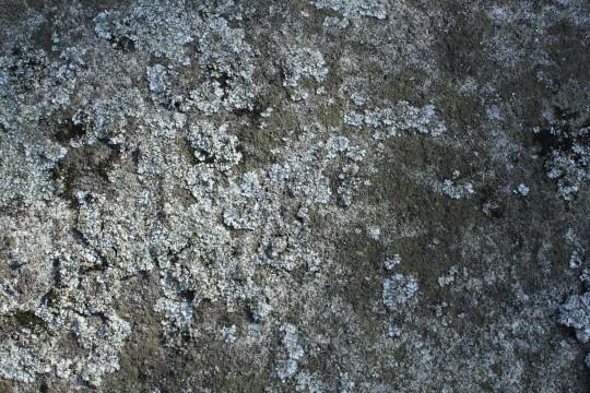 苔で覆われた岩壁