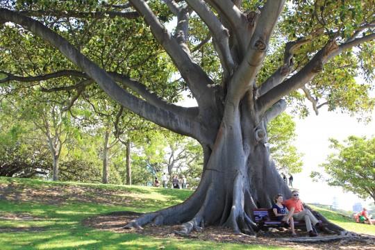 大きな樹がある公園