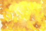 170228_suisai_yellow