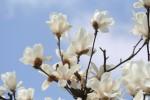 風に吹かれている花