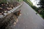 子供を見つめる野良猫