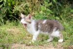 あくびする子猫