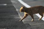 道路横断中の猫
