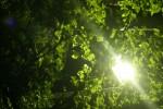 街灯の燈と木の葉
