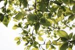 新緑と木漏れ日2