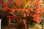 天開稲荷社の赤い鳥居と紅葉