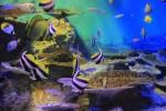 p55_aquarium