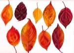 色々な落ち葉