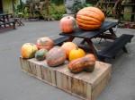 大きなかぼちゃ