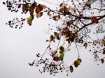 丸い実をつけた樹