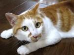 cat_fu