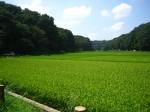 satoyama-1