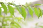 雨に打たれる葉2