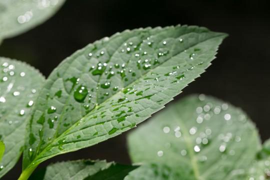 葉っぱに乗った雨粒
