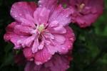 雨に濡れた花
