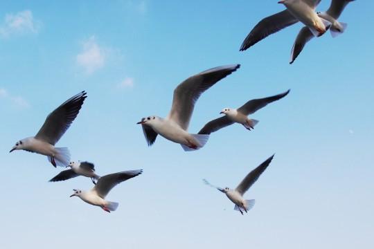 飛ぶ鳥の群れ