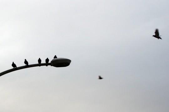 鳥と街灯のシルエット