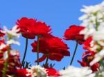 赤い花と青空