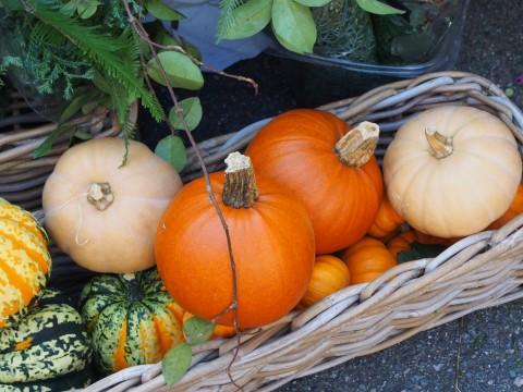 いろいろなかぼちゃ