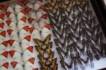 蝶の標本箱
