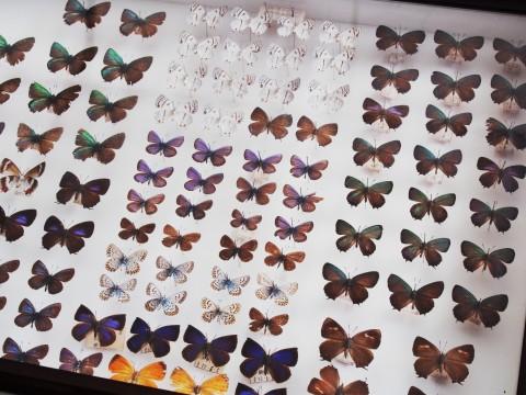 蝶の標本箱 2