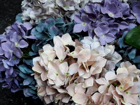 いろいろな紫陽花