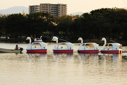 夕方のスワンボート
