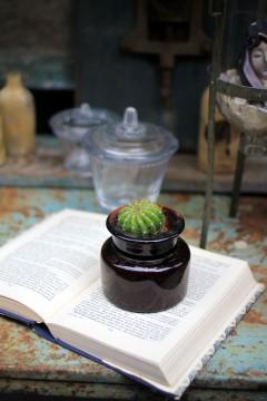 古書とサボテン