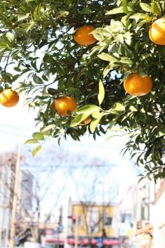 街角のオレンジ