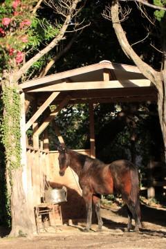 馬小屋の馬