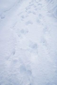 雪の上の足跡