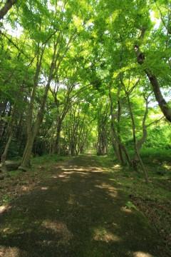 山の中の遊歩道