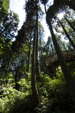 森の中の道2