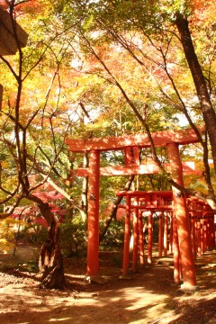 竈門神社の紅葉と鳥居