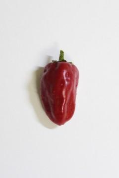 赤パプリカ