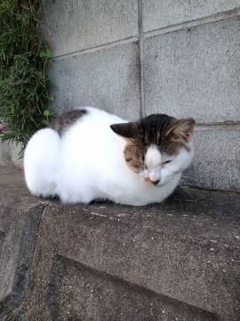目を細めてうとうとしている猫