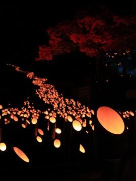 竹灯籠の光の道