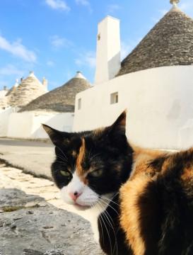 イタリアのアルベロベッロのネコ
