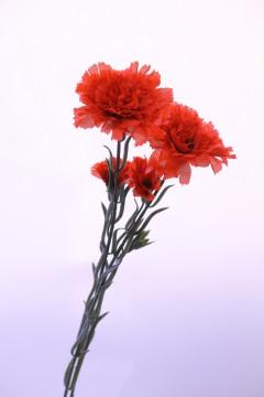 カーネーションの造花3